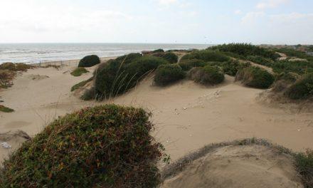 Dune e Bosco del Pigneto