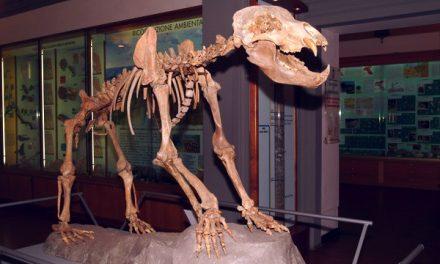 Museo Civico di Paleontologia